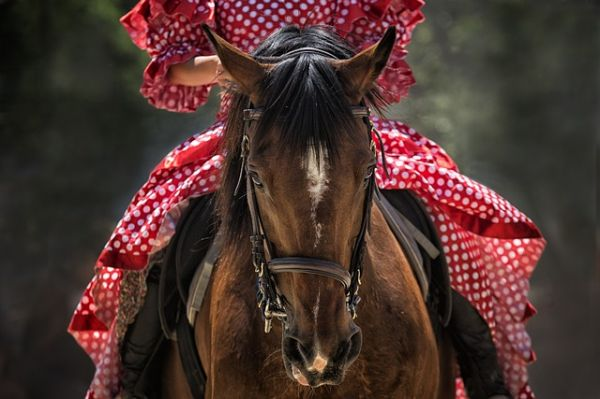 horse-1139142_640.jpg